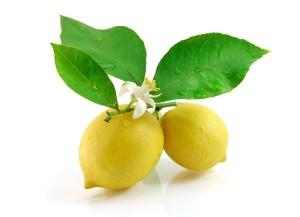 lemon_leaf_flowers_white_background_77957_5384x3892